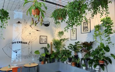 PLANT SWAP : 07.12.2019